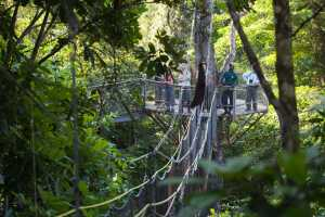 Iwokrama Canopy Walkway and ecotourists birdwatching with a local guide. Platform, and connecting slung bridging. - Guyana-Cosmic Travel