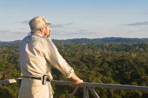 Man looking over the the Amazon forest from a canopy tower, Alta Floresta, Mato Grosso. - Brésil-Cosmic Travel