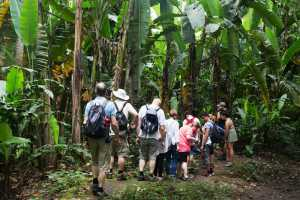 Tourists on a guided tour in the Costa Rica rainforest, Parque Carara - Costa Rica-Cosmic Travel